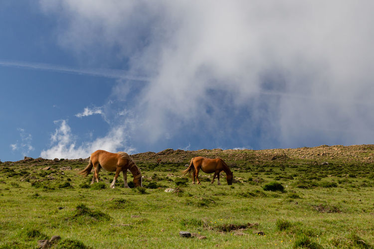 The wild horses at Galicia, Spain Agriculture Animal Animal Themes Animal Wildlife Cloud - Sky Environment Field Grass Grazing Group Of Animals Herbivorous Land Landscape Mammal Nature No People Outdoors Sky Vertebrate