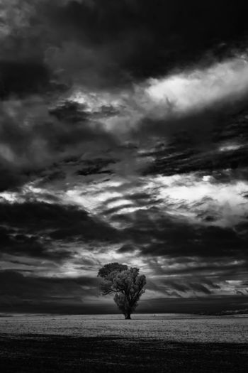 Lone Tree -
