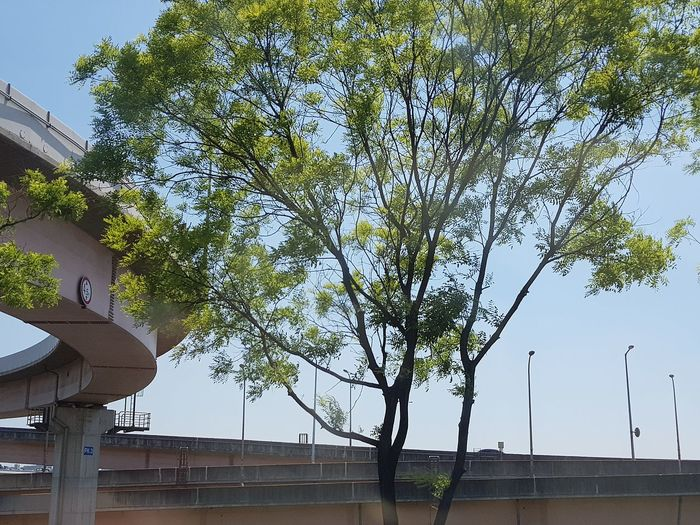 To The Airport Architecture Seoularchitecture Infrastructure Seoulinfrastructure Seoulspring2018 Tripwithsonmay2017 Southkorea Tree Sky