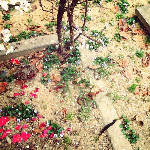 Spring 봄이 떨어지고 있다아~~~~