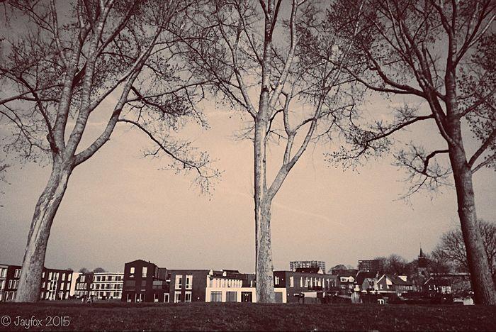 Trees Sepia