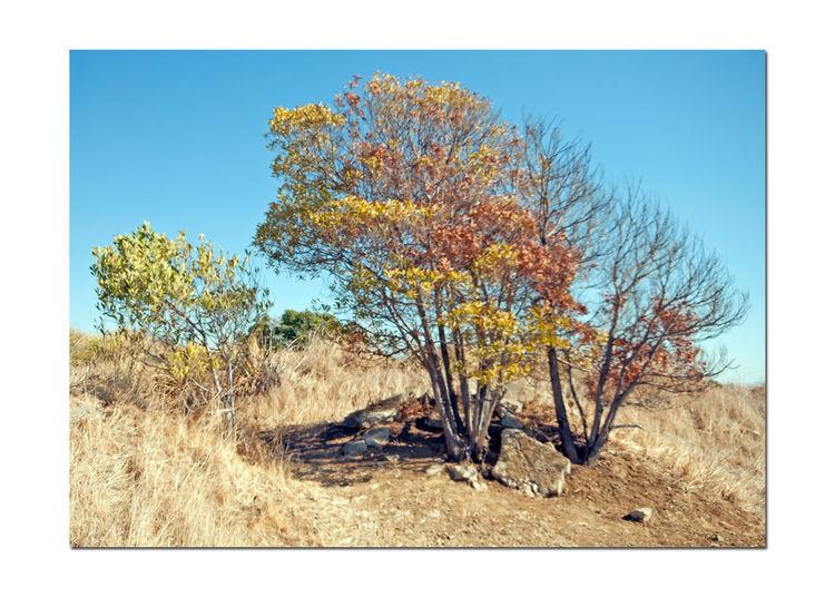 Landscape_Native Plants @ Oyster Bay Pt 3 Restored Marsh Landscape Landscape_Collection Landscape_photography Nature Nature_collection Nature Photography Trees Tree_collection  Tree Photography
