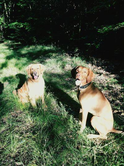 Togetherness Dog Outdoors Happiness Domestic Animals Animal Themes Bestfriends Ijuma Von Terra Lebusana Vizslaoftheday Vizslalove Retrieveroftheday Retriever