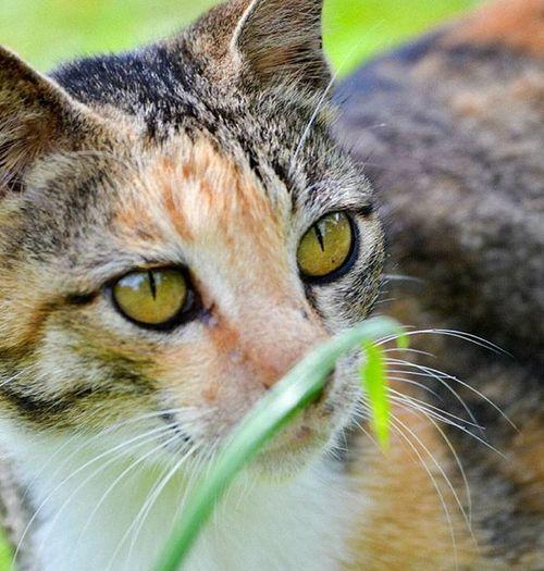 Animal Nature Cat Closeup Binatang Zoom Lens Nikon Blur Kucing ALaM Color Share Sharp