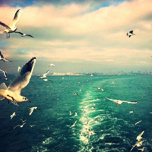 BosphorusIstanbul Seagulls Sea Ferri tripvacationlovefriendsjoyhappinesssummer