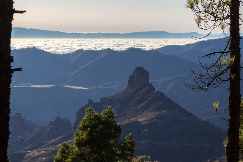Beautiful Nature Canary Islands Gran Canaria Gran Canary Island Nature Perspectives On Nature Roque Nublo Above The Clouds Beauty In Nature Landscape Landscapes Mountain Mountain Range Nature Tree View From Above