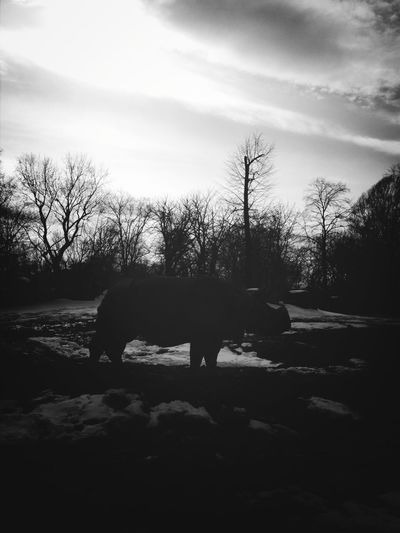 Lonely Zoo Nostalgia Rhino