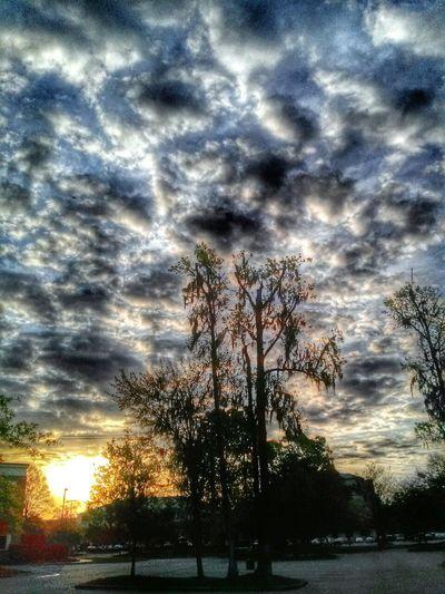 Silhouette Cloudporn Tree Sunrise