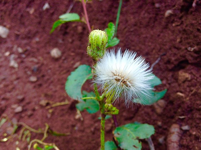 Bright Saturday afternoon🌾 Nature Photography Plant Outdoors Growth Fragility Beauty In Nature No People Close-up Day Freshness White Color PhotographedinMurree! EyeEmNewHere