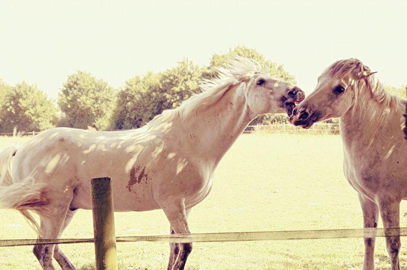 4/4 HorsePlay