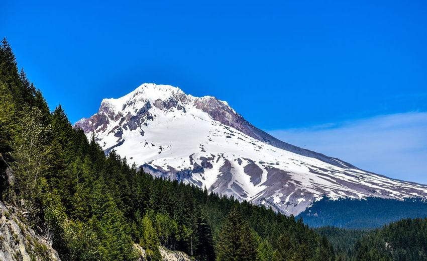 Mt Hood Beauty