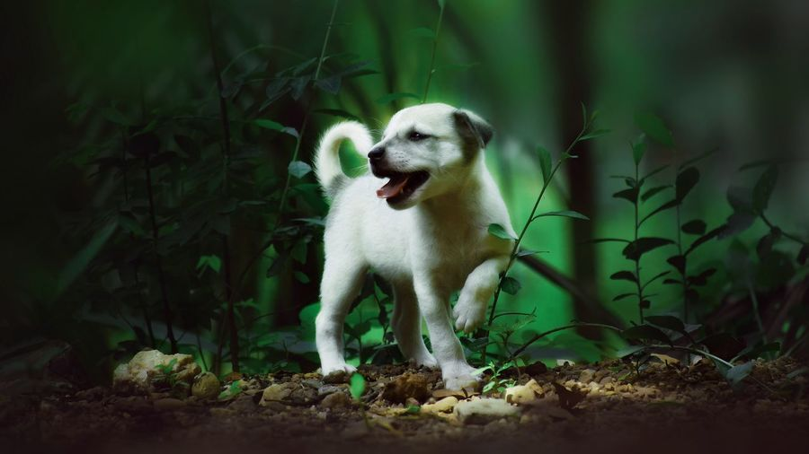 Dog Pets Animal Looking At Camera One Animal Outdoors Nature Cheerful Animal Themes Photography Art Is Everywhere Kerala EyeEm Selects The Week On EyeEm EyeEmNewHere Nature Puppy