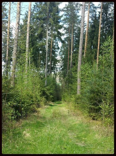 Wood Tree Taking Photos Walking