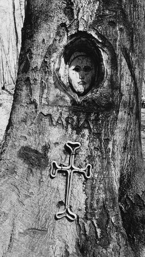 Tree Close-up No People Full Frame Outdoors Day Blessed Virgin Mary Pilgrimage Wood Vértes Mountain