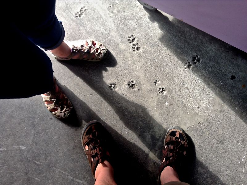 Cement Feet Human Foot Male And Female Paw Print Personal Perspective Sandal Shadows Standing