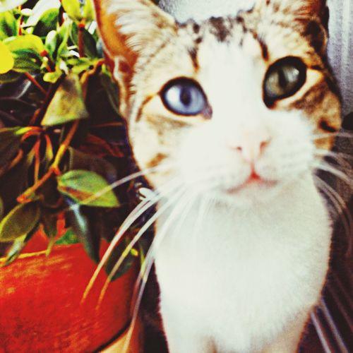 Cute Pets Cats Eyes Cats Cat