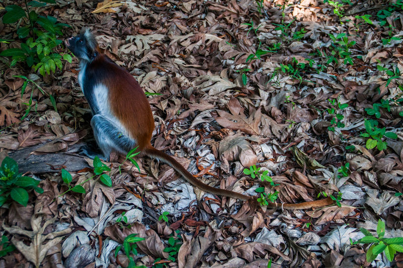 Check This Out EyeEm EyeEm Best Shots EyeEm Nature Lover EyeEm Gallery Zanzibar Animal Animals In The Wild Forest Jozani Forest Monkey No People One Animal Outdoors Popular Photos Red Monkey