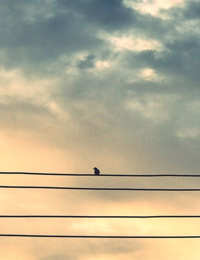 Solitary bird on the wire reminds me that in life we have to be content when alone and when in the company of others. Bird Animals In The Wild Low Angle View Cable Animal Themes Sky Sunset Cloud - Sky One Animal Connection Silhouette Wildlife Animal Wildlife Nature Power Line  No People Outdoors Perching Beauty In Nature Day