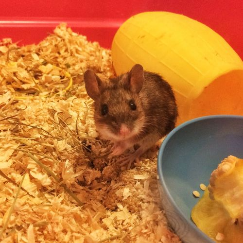 My little old mouse Tadaa Community Danmark Mouse Pets