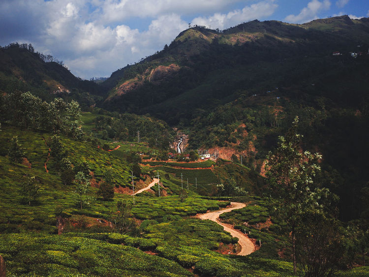 Greenery Scenery India India Landscape Munnar Munnar India Munnar Kerala Munnar Tea Estates Tea Estates Beauty In Nature Greenery India Tea Estates Kerala Kerala India Landscape Landscapes Landscapes Of India Nature Outdoors Outdoors Photography Outdoors❤ Scenics Tea Terraces Terraced Field