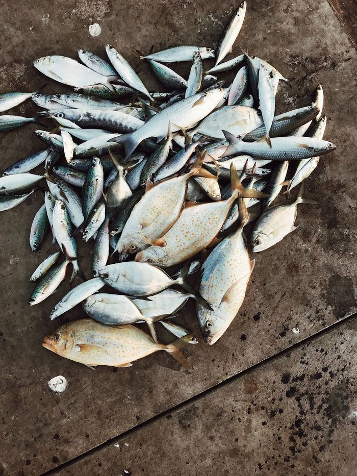 HIGH ANGLE VIEW OF DEAD FISH