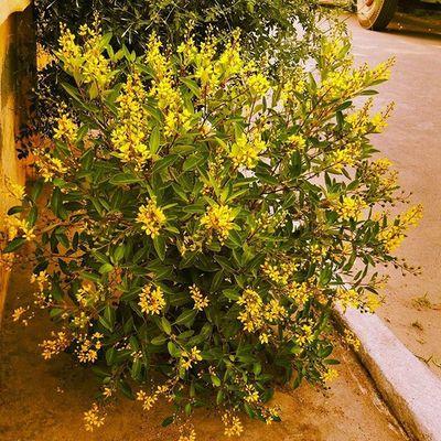 Flowers Ontheroad Beauty Travel