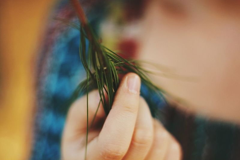 Midsection of woman holding pine tree needles