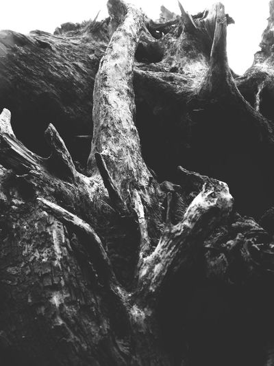 Abstract Nature Textured  Tree Trunk Nature Outdoors Tree Beauty In Nature Close-up Black And White Abstract View Natural Collages Shapes And Forms Patterns In Nature Natural Condition Shapes In Nature  Driftwood Layers And Textures Knotted Wood Black & White Abstractions Wood - Material Weathered Sky