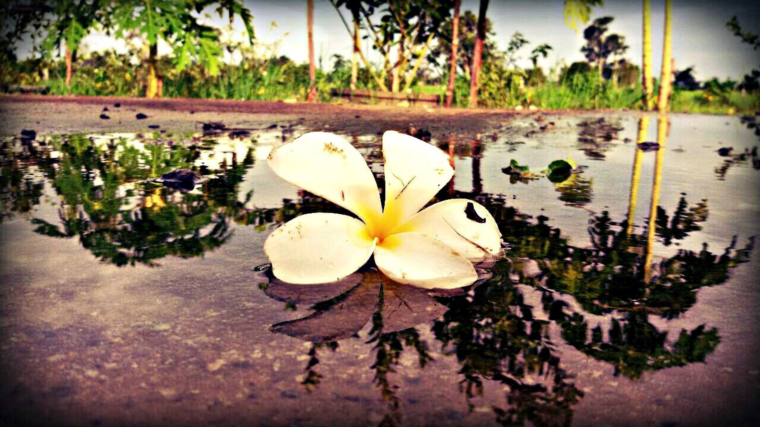 flower, freshness, flower head, fragility, petal, growth, water lily, plant, water, leaf, single flower, beauty in nature, nature, floating on water, pond, close-up, white color, high angle view, stem, cactus