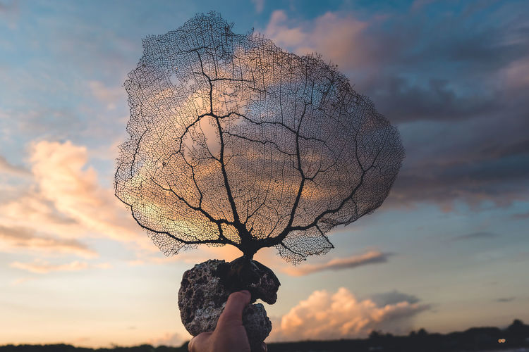 Sky Cloud - Sky Real People One Person Holding Sunset Nature Lifestyles Tree Leisure Activity Human Body Part Human Hand Hand Bare Tree Focus On Foreground Outdoors Plant Unrecognizable Person Beauty In Nature Body Part Finger