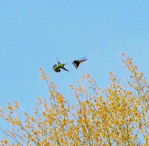 Hummingbirds Spring Has Arrived Deceptively Simple Capture The Moment Two Is Better Than One