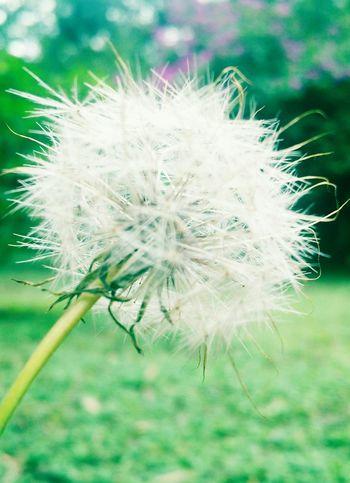 Essa foto faz parte do almoco de ontem que esqueci de postar. Flowers Flores Naturelovers Parques