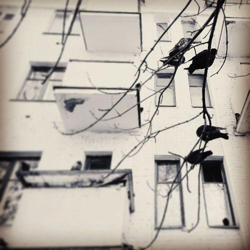 Vscocam Walls Pigeons Moscowstreet moscowmoscow moscow moscowcity mycity citywalks city bw blackandwhite blacknwhite чб прогулки balcony балкон