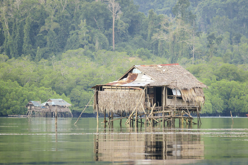 Rustic bamboo house on stilts in a river near a mangrove forest Badjao Bamboo House Bamboo Hut Floating House Floating Market Floating Village House On Stilts House On Water Indigenous  İsland House Islander Mangrove Mangrove Forest Mangrove Tour Nipa Hut Philippines Photos Port Barton Rustic House Stilts Thatched Cottage Traditional House Village Lifestyle Villager Villagers Wooden Hut