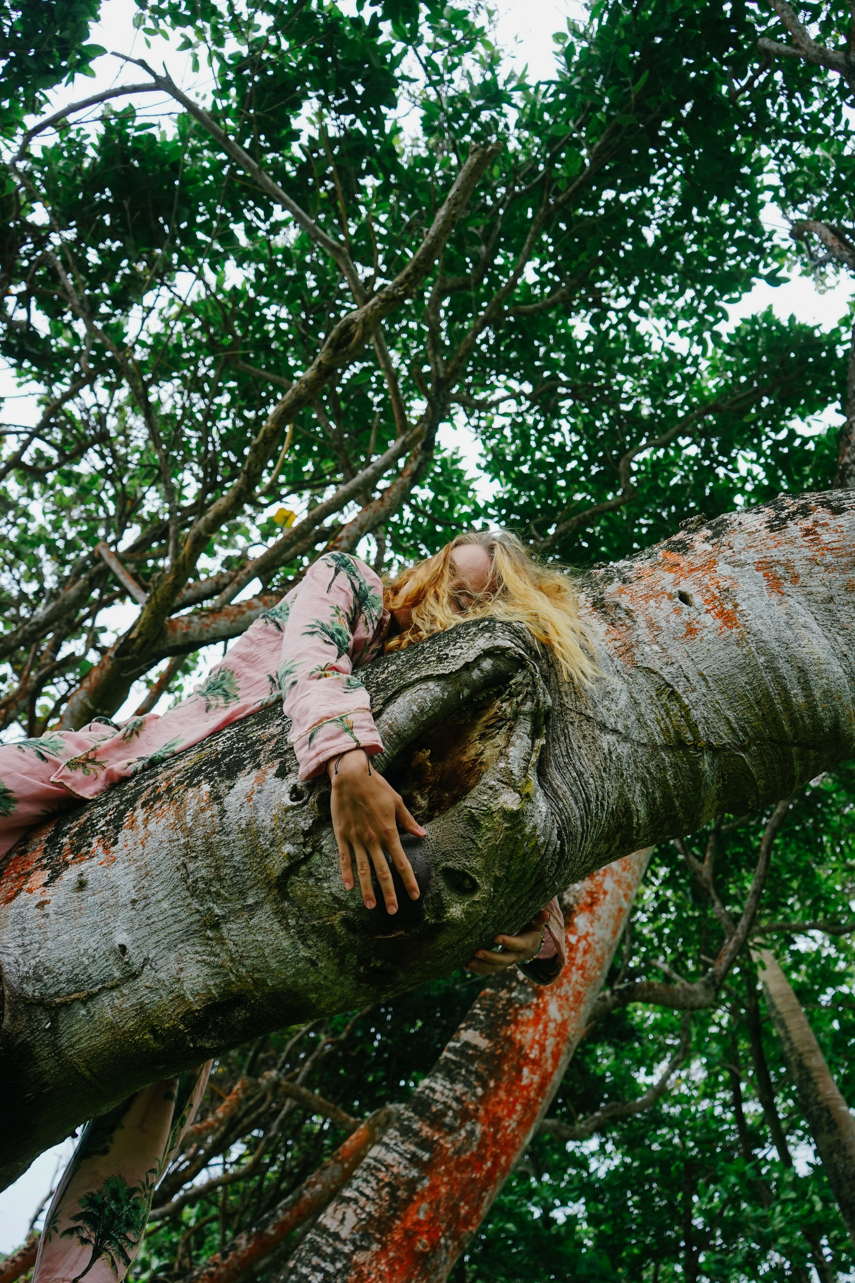 tree, plant, forest, jungle, branch, rainforest, nature, leaf, low angle view, day, growth, outdoors, tree trunk, flower, natural environment, trunk, one person, animal, wildlife, animal wildlife, animal themes, woodland, green, climbing, leisure activity