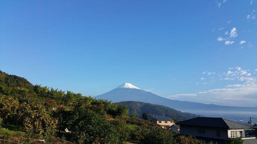 こんにちは。今朝7時45分頃の我が家からの富士山です。何も加工はしていません。青空の下の富士山、最高です。日なたはポカポカ温かく、風もそんなに吹いていないです。今朝方の福島での地震、5年前が思い出されるようで、家事をしながら、ずっと情報に耳を傾けてました。どうか、平穏な日常が続きますように・・・。離れた静岡の地から、現地の方にそんな気持ちが届くよう撮影した今朝の富士山でした。 富士山 Mt.Fuji Blue Sky 青空 祈り Hello World