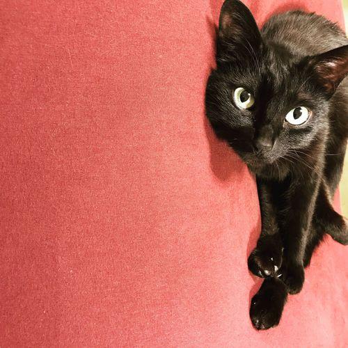 High angle portrait of black cat