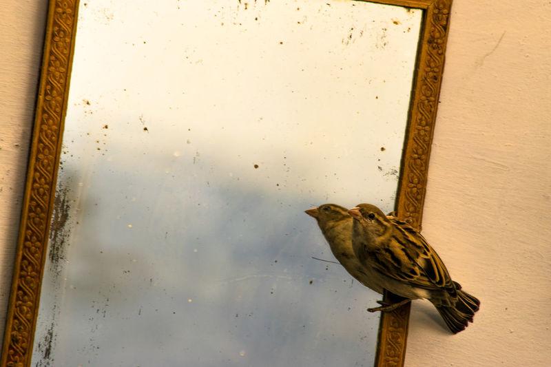 #BirdInMyRoom #mirrorimage #RANDOM #Sparrow Bird Close-up Day No People