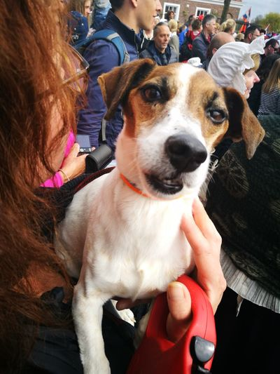 Dog Pets Animal Themes Domestic Animals Portrait Looking At Camera People Crowd Event Animal Crowded Festival Brielle