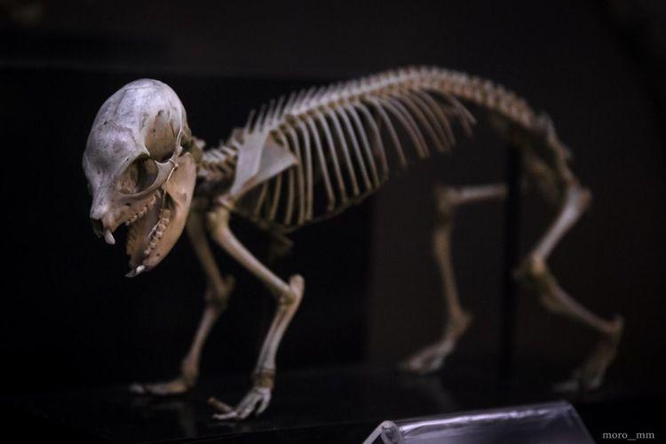 Close-up of skeleton against black background