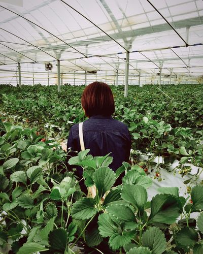 Fruits Fruit Holiday Strawberry Strawberries Picking Strawberies  Showcase April Family Berry Strawberry Farm Let Your Hair Down Everyday Emotion The Portraitist - 2016 EyeEm Awards Ultimate Japan People Together