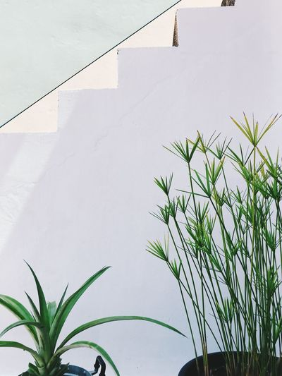 Plant Growth Nature No People Architecture Green Color Built Structure Day Leaf Plant Part Close-up Building Exterior Outdoors Beauty In Nature Low Angle View Wall - Building Feature Building Freshness White Color