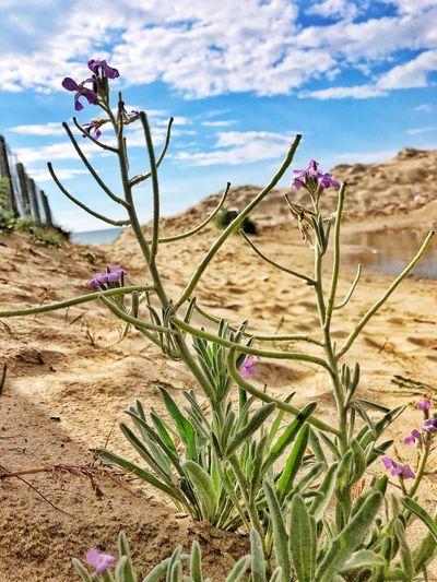 Plant Flower Landscape