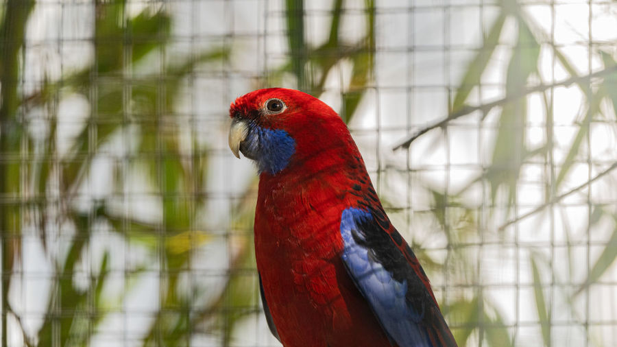 Close-up of parrot perching on a tree