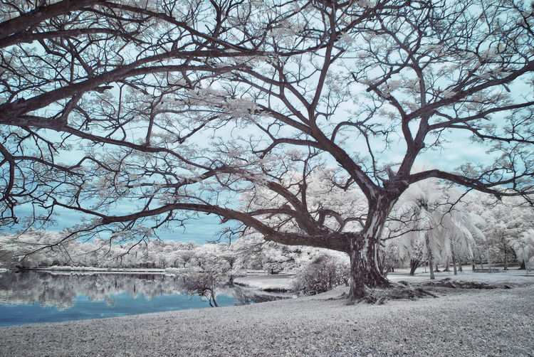 An infrared view of a lakeside with white foliage grass and trees Infrared White Foliage Abstract Arts Beauty In Nature Color Infrared Day Infrared Photography Landscape Nature No People Outdoors Scenics Sky Tranquil Scene Tranquility Tree Water Yellow Foliage