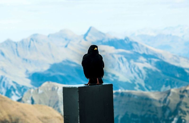 Bird perching on a mountain