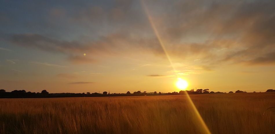 Countryside Landscape View Town Fields Golden Sky Summer Night Dusk Sunlight Flare Englishcountryside Distance Clouds And Sky Flower Rural Scene Sunset Tree Cereal Plant Multi Colored Storm Cloud Agriculture Gold Colored Summer