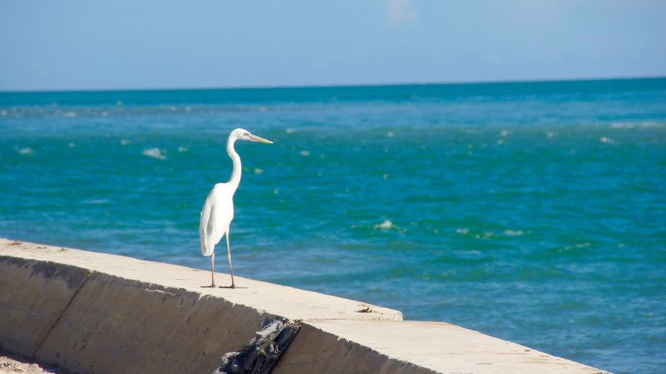 Heron Bird Ocean Island Florida