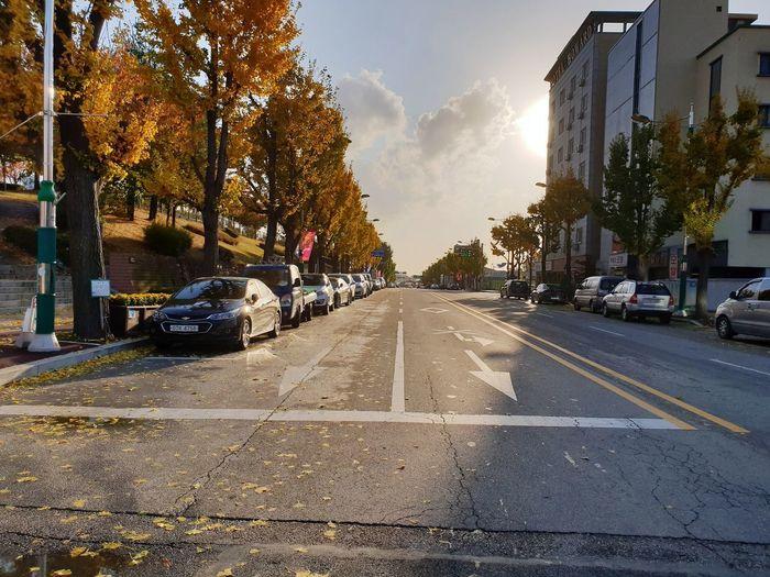 Autumn colors Road Marking Land Vehicle Zebra Crossing Asphalt Double Yellow Line Crosswalk First Eyeem Photo