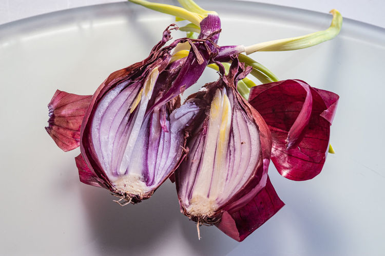 Useless Onion Onion Onions Vegetables Directly Above Vegetable Waste Beauty In Decay Freshness Close-up No People Food And Drink Indoors  Food Still Life Flowering Plant Plant Beauty In Nature Nature Ingredient Raw Food Purple